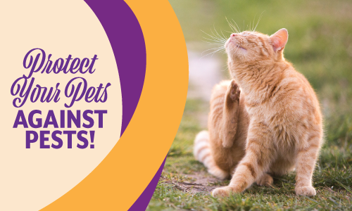 Protect Your Pets Against Pests