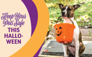 Halloween Pet Safety | Mobile Veterinary Clinic