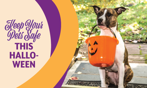 Halloween Pet Safety   Mobile Veterinary Clinic