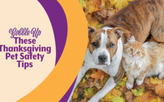 Thanksgiving Pet Safety Tips | Mobile Veterinary Clinic