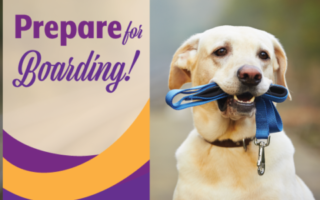 Get Your Pet Ready for Boarding!