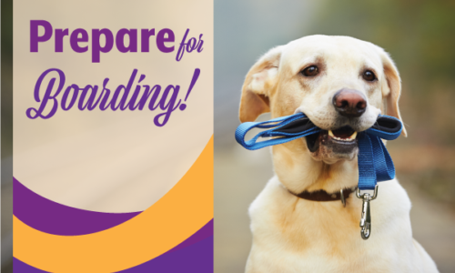 Prepare your pet for boarding | Mobile Veterinary Clinic