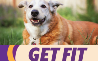 New Year's Resolutions | Mobile Veterinary Clinic