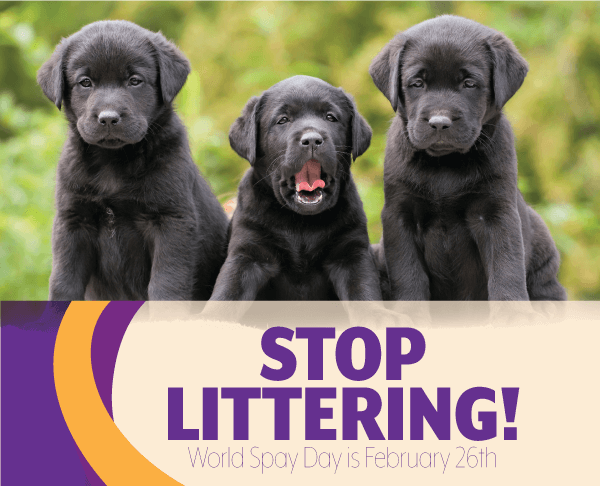 Stop Littering! World Spay Day is February 26th