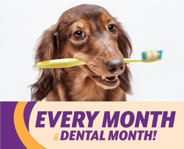 Every Month is Dental Month