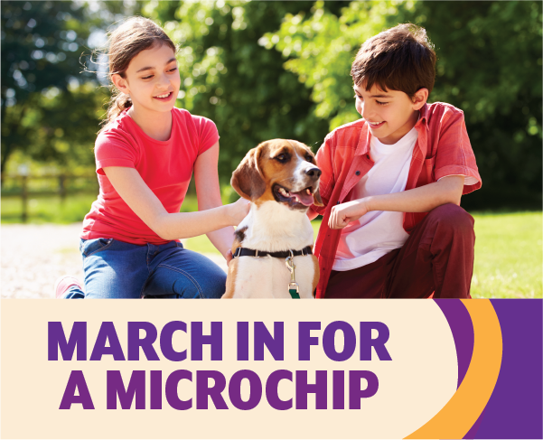 March in for a Microchip